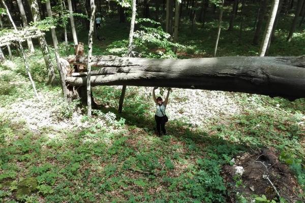 po-drzewo-do-lasu92F5534F-3EEE-D888-2820-56D99BDC5536.jpg